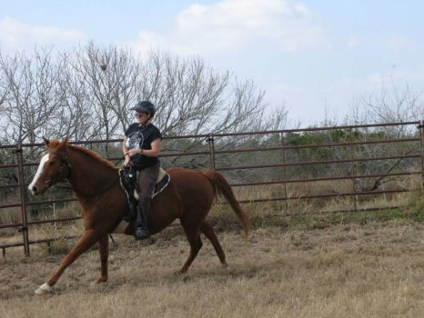 This is Mister being evaluated by a trainer.  He's another foster available for adoption from Bluebonnet Equine Humane Society--