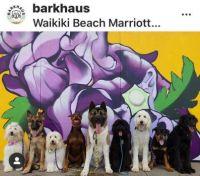 Barkhaus -- Waikiki