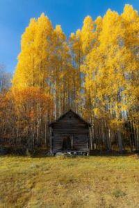 Listí žloutne