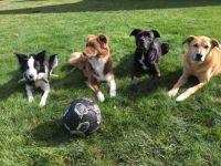 My Crew:  Kate, Pippi, Bug, Taz