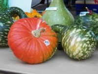 Various gourds