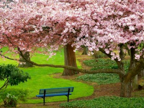 Dogwood tree and bench