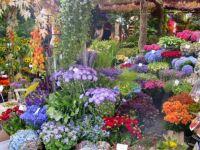 Amsterdan flowers market
