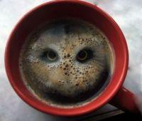 Twit-T-hoo much Caffeine?
