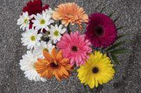 flowersbouquetpetals