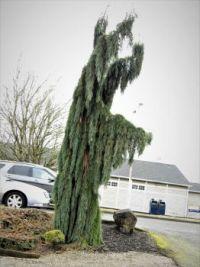 Alien looking tree