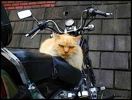 Write a Caption!  cat & bike