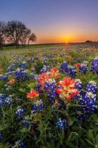 Západ slunce a květy
