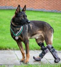 A Medal for hero a Special Forces Dog, Kuno