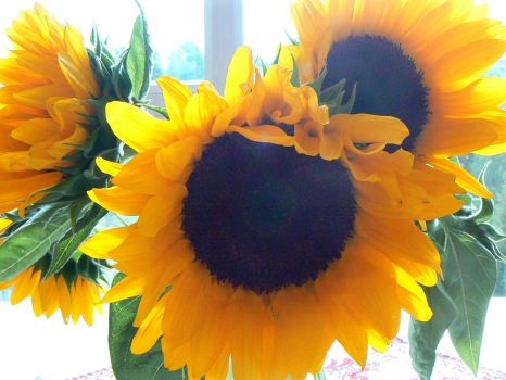 Sunflowers for Marcine!