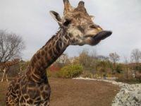 Zoo workshop 11-14 041