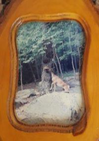 The Deer Bandit    (Standing on his hind legs)