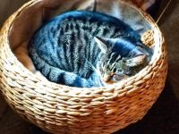 Kitty basket sunshine sleep (larger)