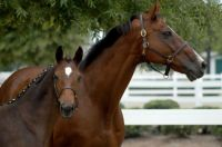 irish-thoroughbred-mare-and-foal-flint-gallery