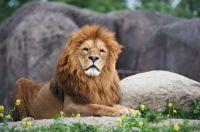 Odense Zoo - Ard Jongsma