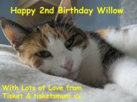 Happy Birthday Willow