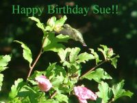 Happy Birthday for Sue