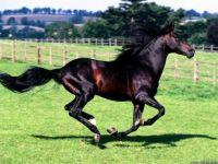 full-stride_spanish-horse