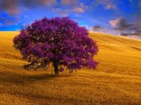 All About The Purple Tree