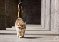 Just a fine-looking cat on a stroll. Pretty, huh?