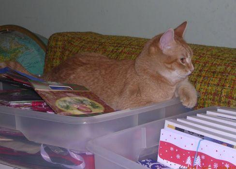 Wally:  Helping wrap presents