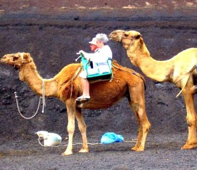 Write a Caption!  camel ride
