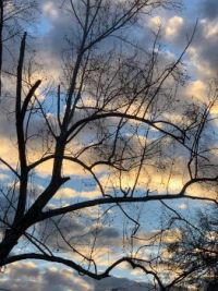 January afternoon