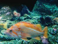 Vancouver Aquarium 2
