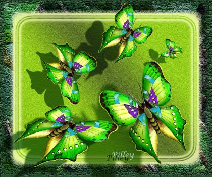 Butterfly.green.study