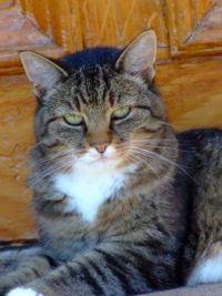 Cat at Prince Edward Island