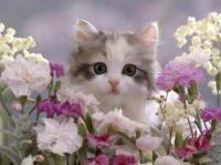 Cute Kitten and Pretty flowers