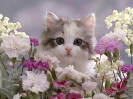 Cute Kitten and Pretty flowers