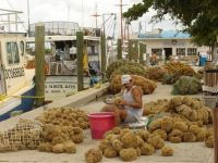 Sorting Sponges in Tarpon Springs