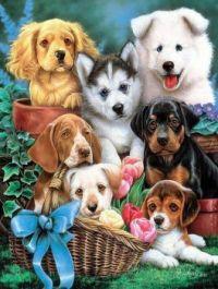 Seven puppies