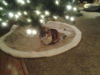 JoJo under the christmas tree 2019.jpg