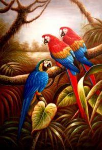 Amazonian Macaws