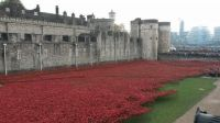 Yet another pictureofthose Ceramic Poppies