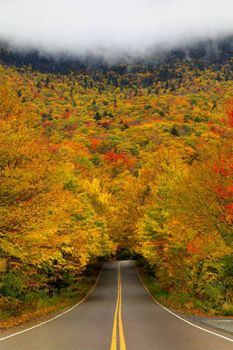 Fall, Wa.