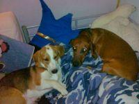 Spot and Otto again