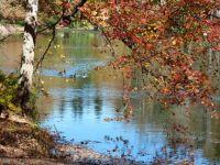 Biltmore Estate Pond - October 2014