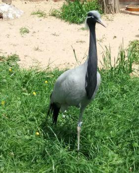 jeřáb (crane)