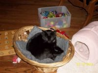 Miss Blackie Bear - Don't tell CreamPuff that I am in his basket.