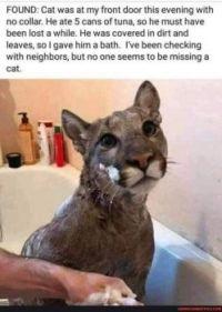 Lost Cat LOL #113