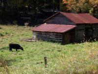 old barn, Georgia autumn