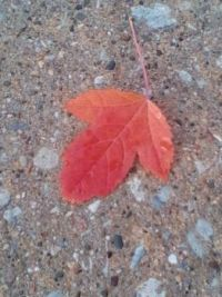 Leaf resting on cement