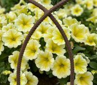 Flowers behind iron