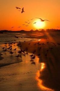 Seagulls in sun's shades of gold