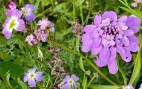 Flower meadow III