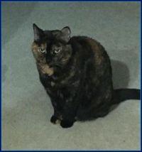 77 My Kitty - Nenna