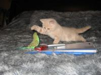 Kitten and parakeet